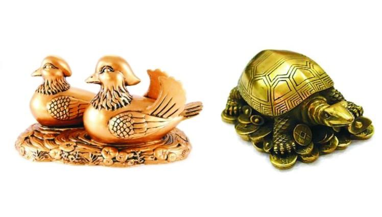 kornjaca i mandarinske patke.jpg