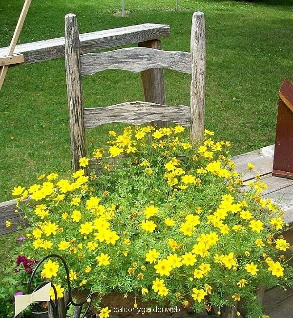 chiar-planter-flower-combination