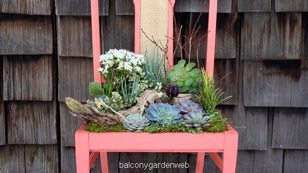 succulent-chiar-planter