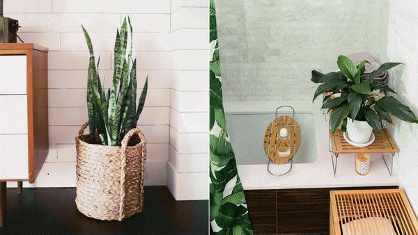 best-bathroom-plants