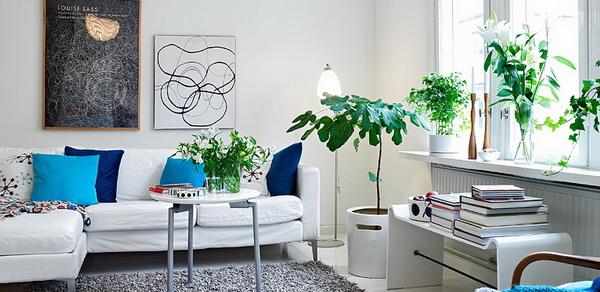 living-room-plantsu
